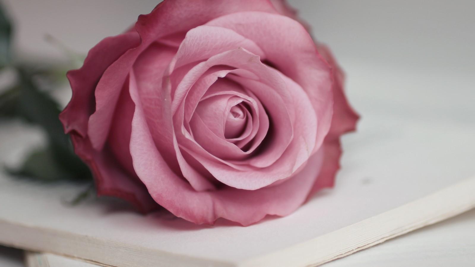 پروفایل عکس گل