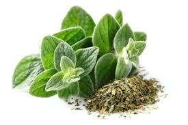 خواص درمانی گیاه پونه