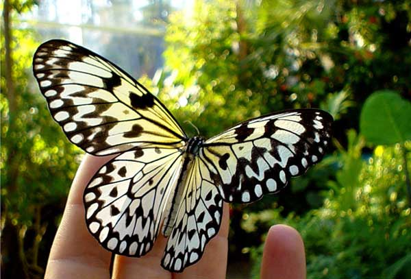 عکس پروفایل پروانه زیبا و فانتزی
