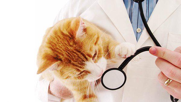 عکس نوشته پروفایل روز دامپزشک، متن و اس ام اس تبریک روز دامپزشک