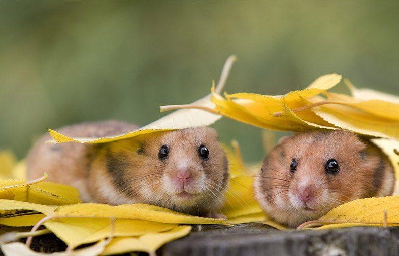 عکس حیوانات زیبا و جذاب و بامزه برای پروفایل و با کیفیت بالا