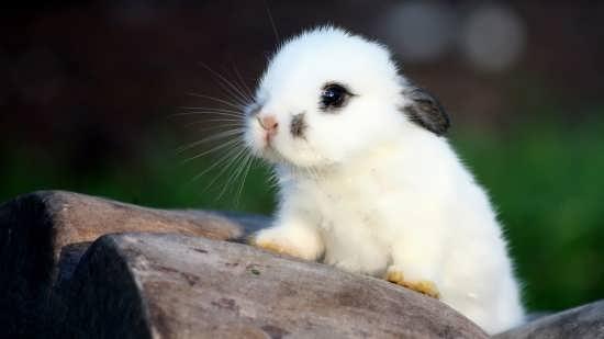 ع حیوانات زیبا و جذاب و بامزه برای پروفایل و با کیفیت بالا