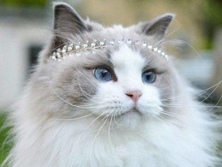 عکس گربه های ناز و پشمالو خانگی
