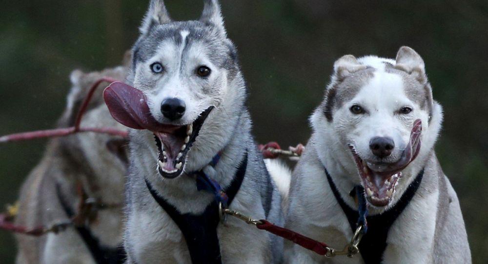عکس سگ زیبا و بامزه برای پروفایل؛ عکس سگ های پشمالو و خانگی