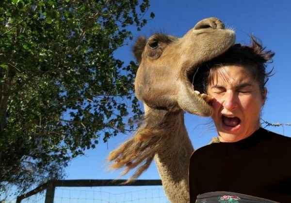 عجیب ترین و جالب ترین عکس های سلفی جهان؛ خنده دارترین و ترسناک ترین عکس سلفی