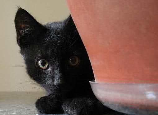 آیا بدشگون بودن گربه سیاه خرافات است؟