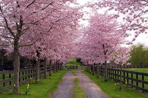 انشا در مورد فصل بهار؛ انشای زیبا در مورد زیبایی های بهار
