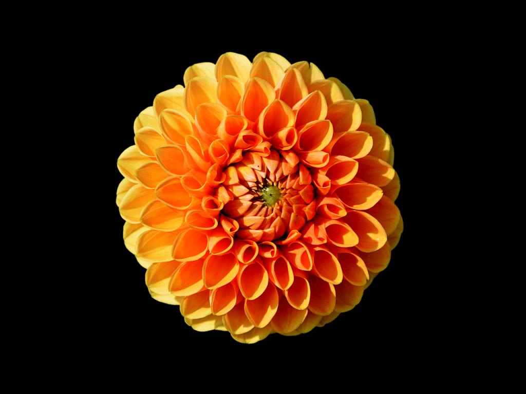 عکس استوری گل اینستاگرام