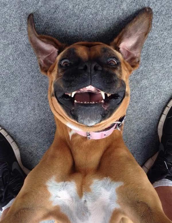 متن خنده دار و اس ام اس طنز + عکس بامزه و خنده دار حیوانات