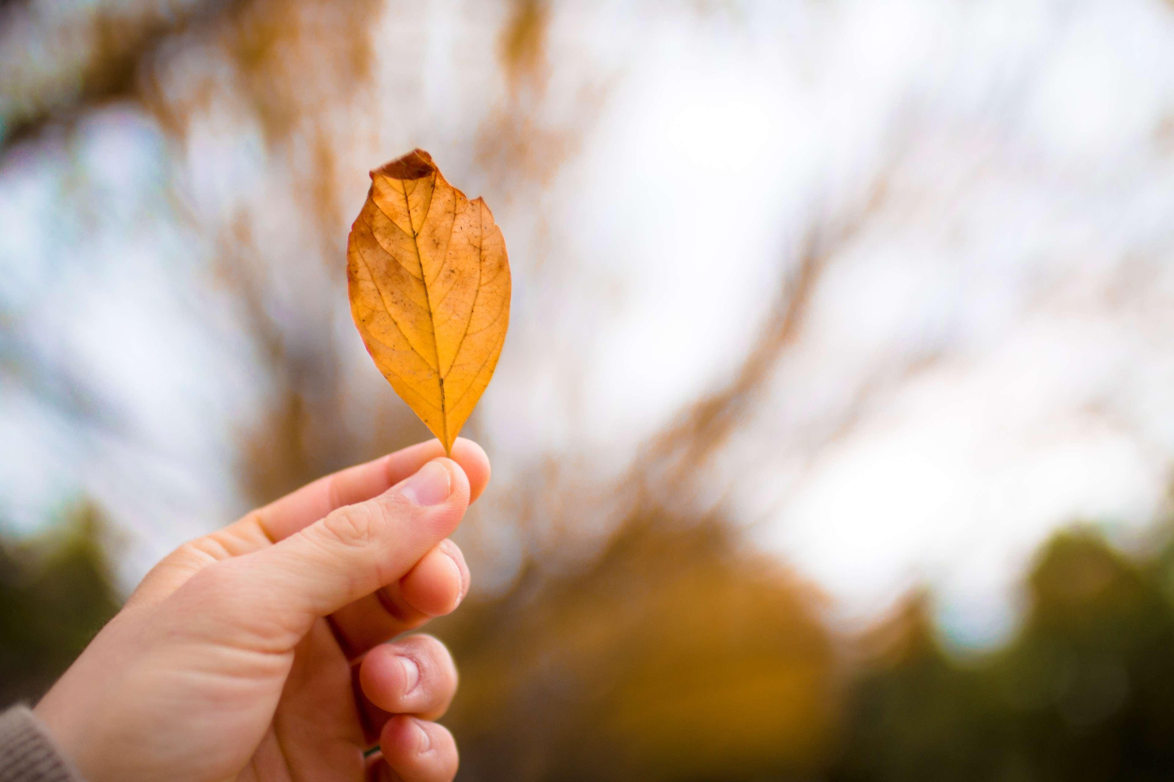 عکس دست و برگ پاییزی عاشقانه