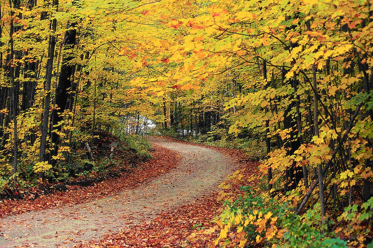 انشا در مورد فصل پاییز