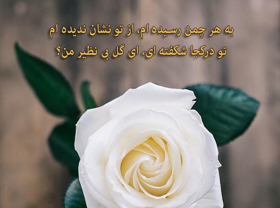 شعر در مورد گل