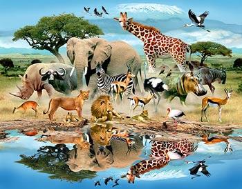 ضرب المثل با موضوع حیوانات