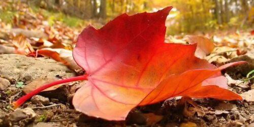 انشا پاییز