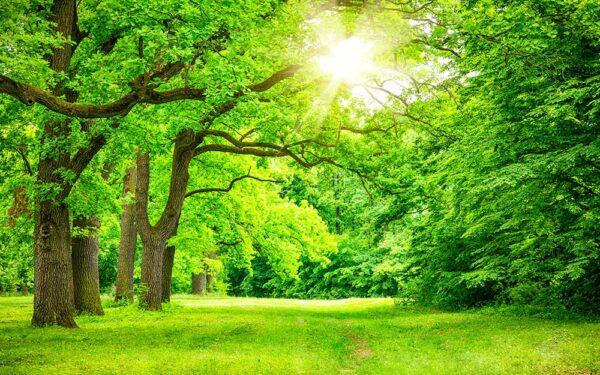 انشا درخت