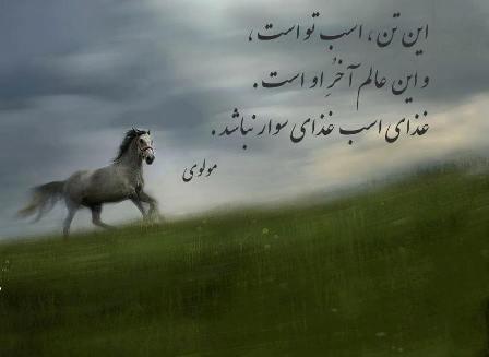 شعر درباره اسب + مجموعه اشعار و متن های زیبا در مورد حیوان نجیب اسب